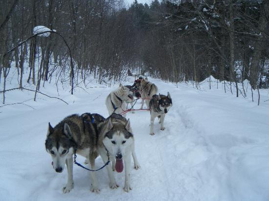 Stone Hill Inn: Peace Pups Dog Sledding!