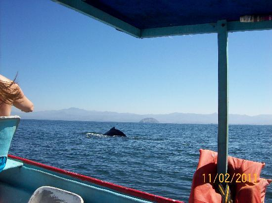 Decameron Los Cocos: whalewatching from our boat