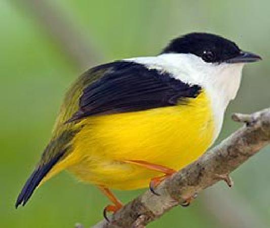 Spiritwind Reef Resort: Beautiful Birds