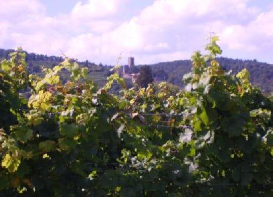 Wachenheim an der Weinstrasse, Tyskland: Blick zur Burgruine Wachtenburg in Wachenheim