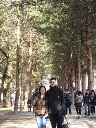 Chuncheon, Sør-Korea: white pines photo spot