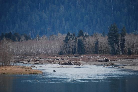 Lochaerie Resort: Fishermen where the Quinault River meets Lake