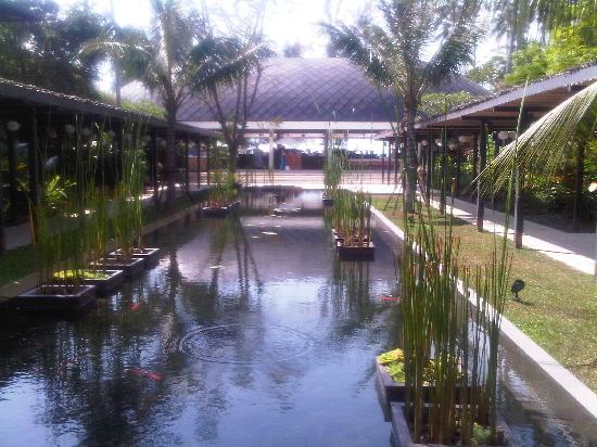 Nikki Beach Resort & Spa : Koi pond