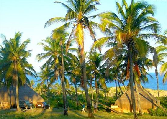 Guiquindo Lodge: The palms are great
