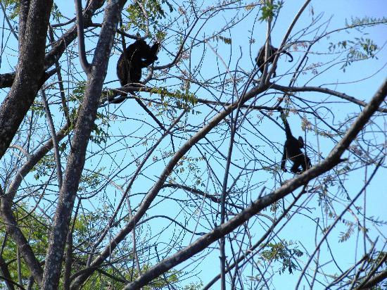 Finca Buena Fuente Residence Hotel: le scimmiette sugli alberi