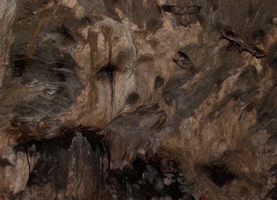 Nature Trekking: Oilbirds in Cumaca Cave