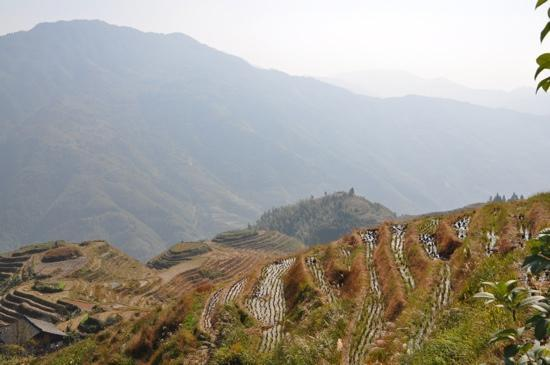 Ping'an Village: Terraces in November.