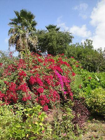 JA Jebel Ali Beach Hotel: Hotel gardens