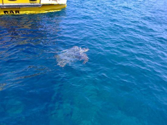 Zakynthos, Griekenland: tartaruga vista durante un escursione