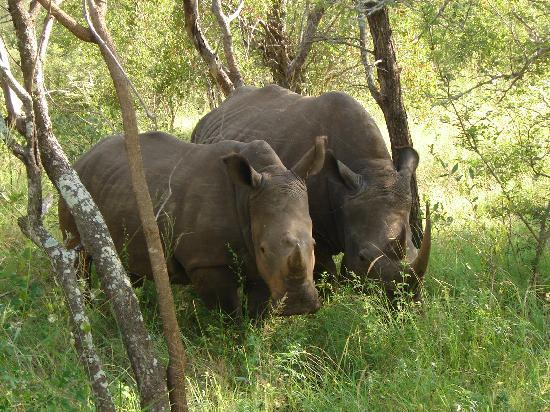 Makalali Private Game Reserve, Sydafrika: What you see and how close you get!!
