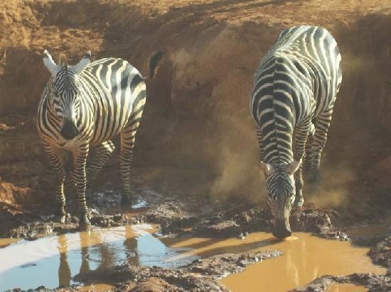 Clubviaggi Resort Twiga Beach & SPA: safari BLU con tony manero