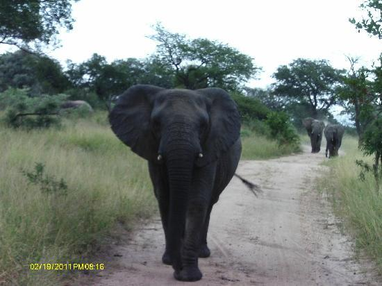 Kapama River Lodge : Elephant