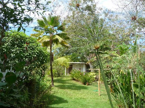 Hotel Horizontes de Montezuma: Garten des Hotels