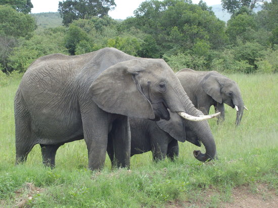 Pounds East Africa Safaris - Balloon Safari : Elephants