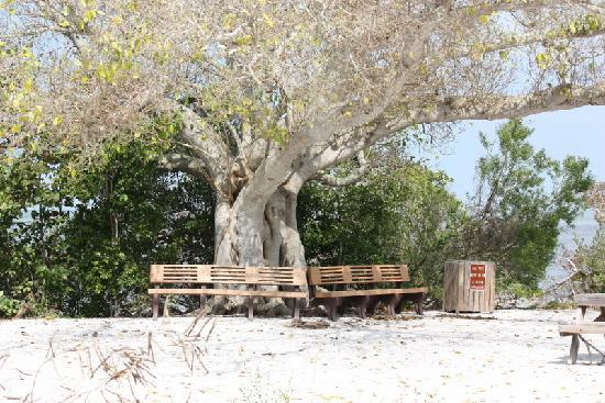 Robinson Nature Preserve : This is the first rest area on the bayside