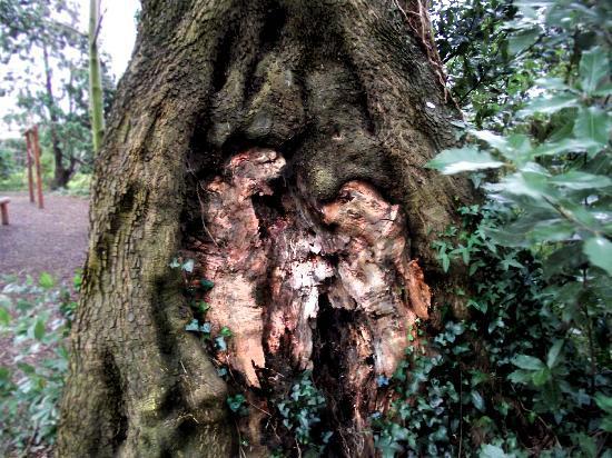 old trees near rathfarnham castle telling their one stories