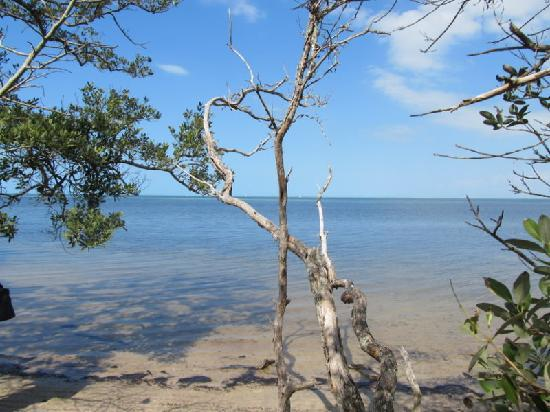 Bradenton, FL: Robinson Preserve is a beautiful and relaxing place to visit