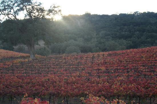 HammerSky Vineyards: Fall at HammerSky