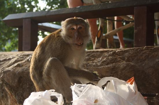 Monkeys In Phra Nang Picture Of Railay Bay Resort Spa