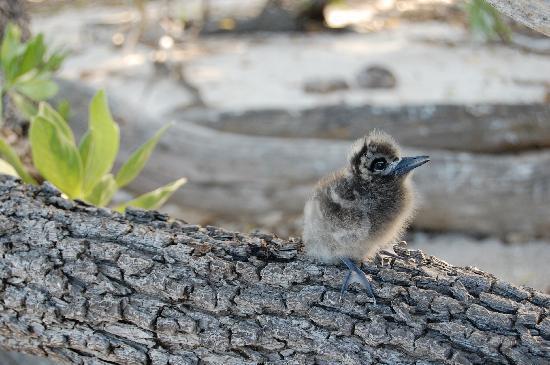 Tikehau Ninamu Resort : Bird Isle
