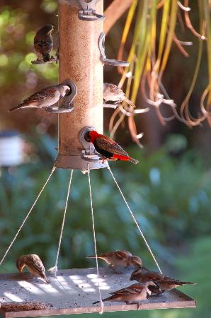 Thabile Lodge: Even the birds were spoilt