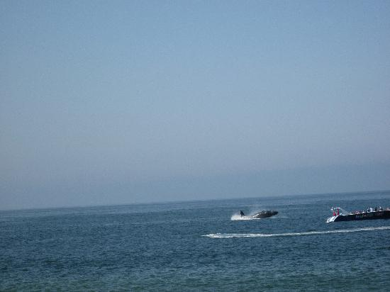Canto Del Sol Plaza Vallarta: From the beach.  Whales jumping