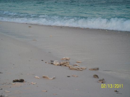 Mangenguey Island: Beach shore....