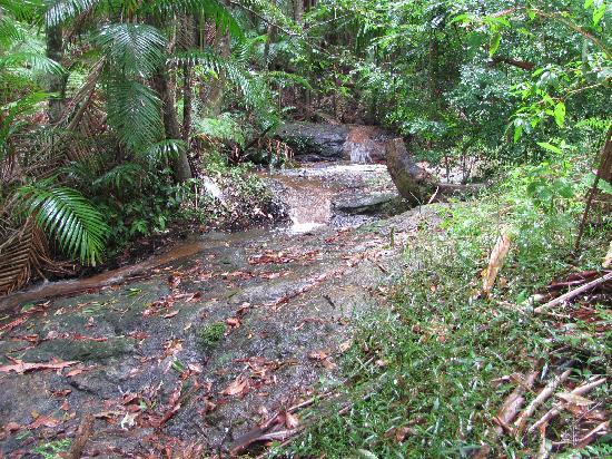Montville Country Cabins: Rainforest walk