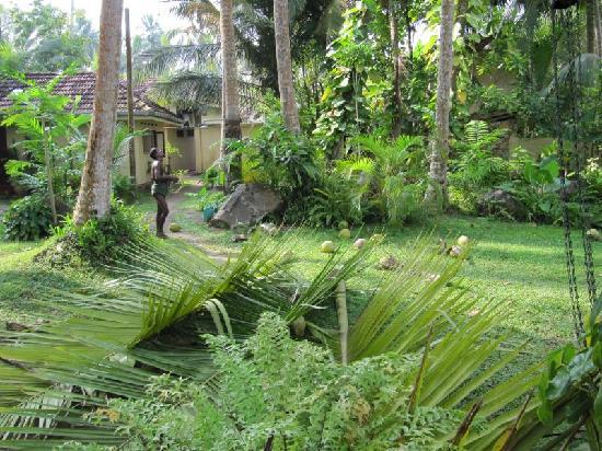 Shangri La Guest House: garden