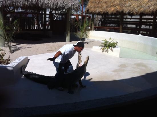 Miccosukee, FL: gator show