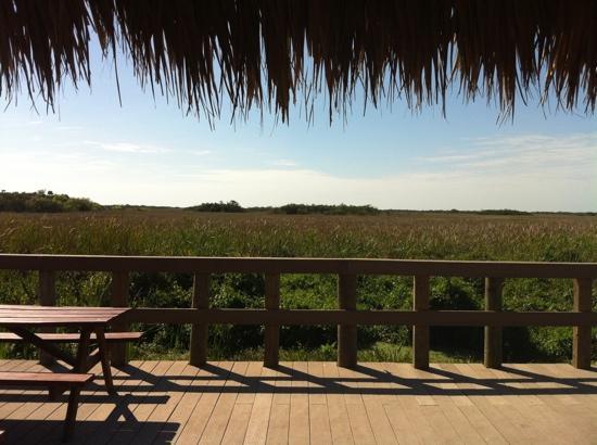 Miccosukee, Φλόριντα: circuit nature