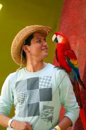 Chiapa de Corzo, Μεξικό: contacto animal