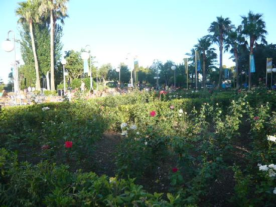 Club MAC Alcudia: Lovely Grounds
