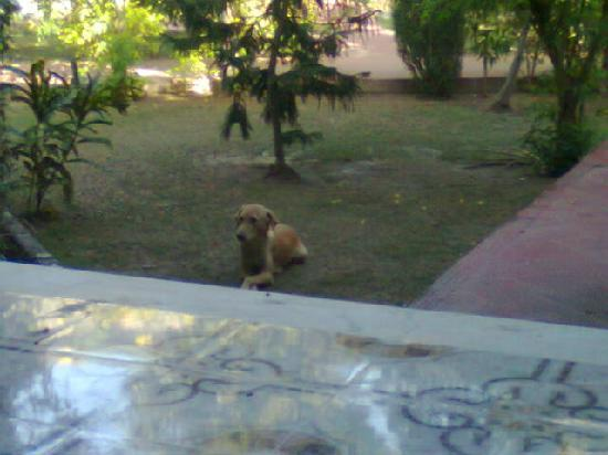 WelcomHeritage Ranthambore Forest Resort: stray dog who stays with us whole three days