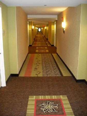 Hilton Garden Inn Columbia / Northeast: 2nd floor hallway