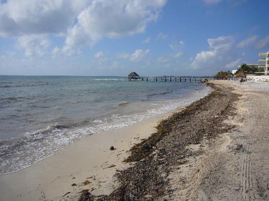 Seaweed problem - Picture of Azul Beach Resort Resort
