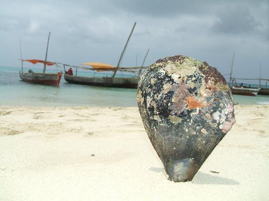 Stone Town, Tanzanya: Una cozzona gigante da un KG Buonissimaaaaaaaaa