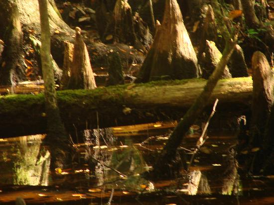 Audubon Swamp Garden: Walking along the boardwalk