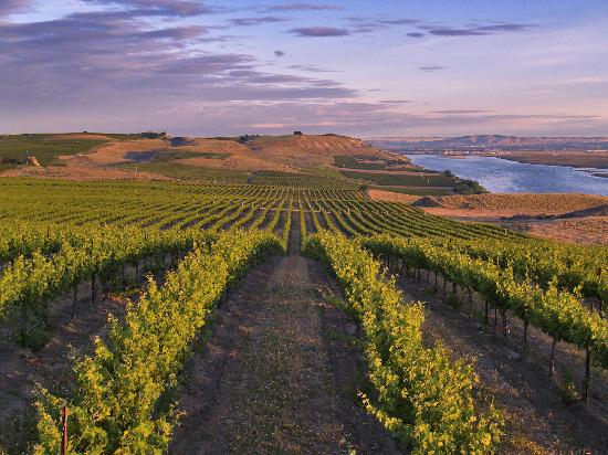 The Heart of Washington Wine Country, Tri-Cities, WA - Photo by:  John Clement