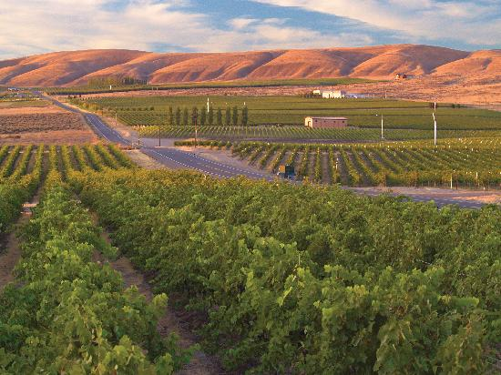 West Richland, WA: The Heart of Washington Wine Country, Tri-Cities, WA - Photo by: John Clement