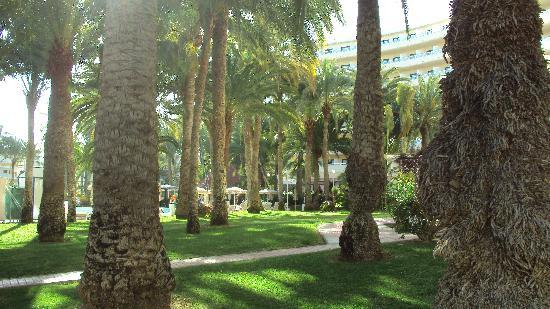 Hotel Riu Palmeras / Bung Riu Palmitos: parco palme stupendo
