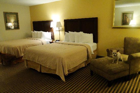 Quality Inn & Suites: Room 115- very nice!