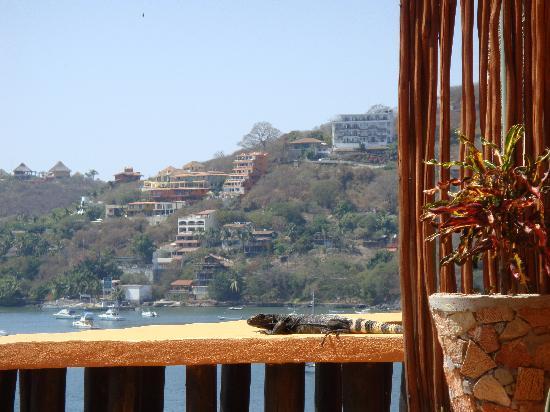 Casa Adriana: Our Iguana friend who visted us every day.