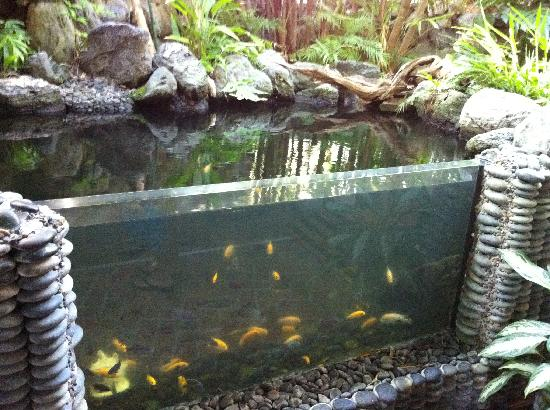 Heron House: the fish in our rain forest area