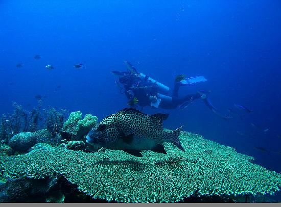 Wangi Wangi Island, Indonesia: Spectacular Wakatobi Diving