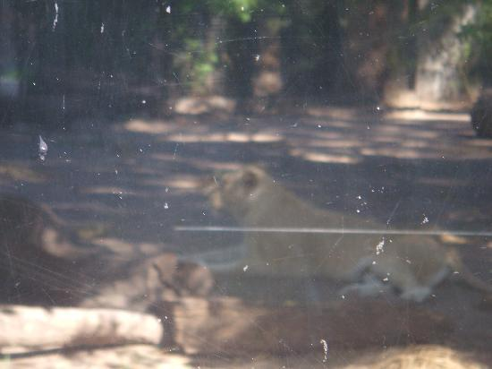 Zoo Buenos Aires: Big cat house - can't see the animals!