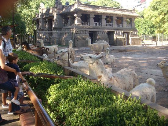 Zoo Buenos Aires: Feeding llamas via a chute