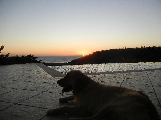 Finca Las Nubes: Augie, Natalies golden retriever