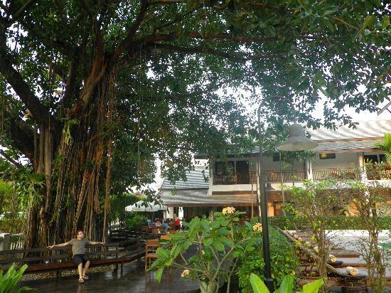 Rimping Village: coté restau et piscine