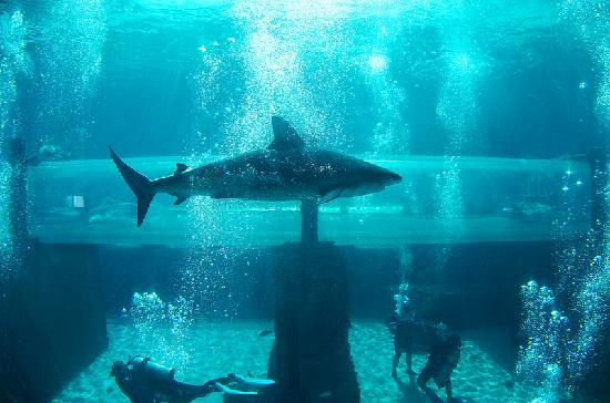 water slide tunnel through shark tank picture of aquaventure water